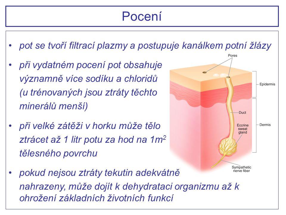 pot se tvoří filtrací plazmy a postupuje kanálkem potní žlázy při vydatném pocení pot obsahuje významně více sodíku a chloridů (u trénovaných jsou ztr