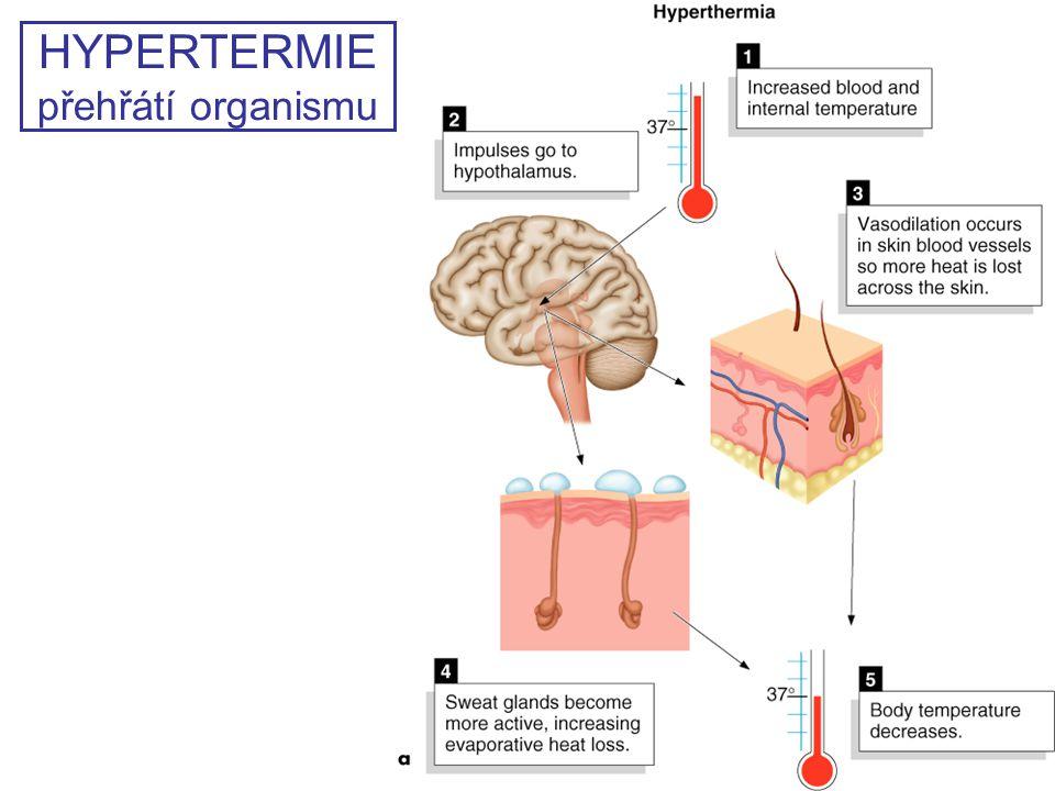 HYPERTERMIE přehřátí organismu