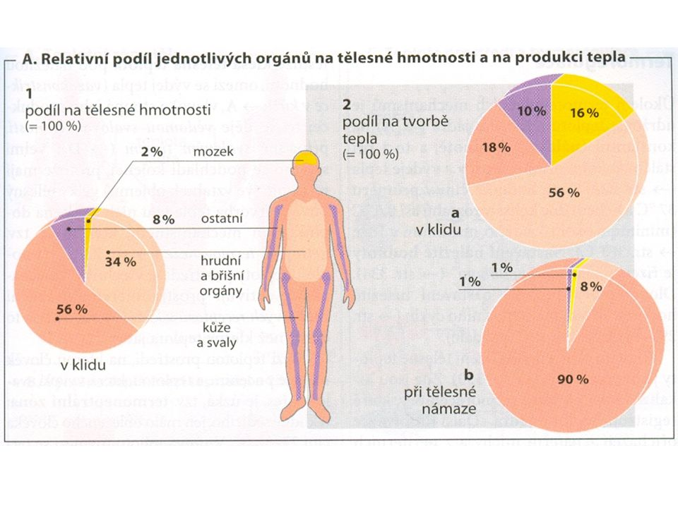 dehydratace tkání zvláštní forma anémie (objem erytrocytů klesá o 15% za 2 týdny, i když po 2 měsících se může téměř normalizovat): - dehydratace vede nejdříve k relativnímu nadbytku erytrocytů, to zastaví erytropoézu - krvinky jsou dokonce ne zcela jasným způsobem odbourávány - hematokrit po návratu nejdříve dále klesá (protože se normalizuje objem plasmy), pak se během několika týdnů normalizuje snížený objem krve - menší nároky na srdce - zmenšuje se velikost a výkonnost srdce.