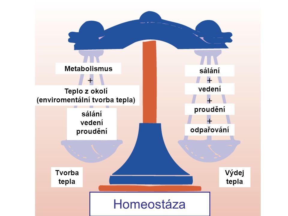 sálaní (radiace) vedení (kondukce) proudění (konvekce) odpařování - pocení (evaporace) Výdeje tepla sálání vedení proudění odpařování