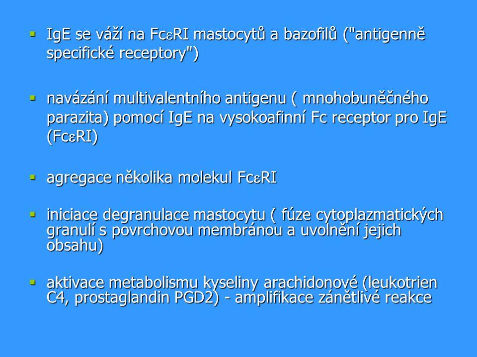  IgE se váží na Fc  RI mastocytů a bazofilů ( antigenně specifické receptory )  navázání multivalentního antigenu ( mnohobuněčného parazita) pomocí IgE na vysokoafinní Fc receptor pro IgE (Fc  RI)  agregace několika molekul Fc  RI  iniciace degranulace mastocytu ( fúze cytoplazmatických granulí s povrchovou membránou a uvolnění jejich obsahu)  aktivace metabolismu kyseliny arachidonové (leukotrien C4, prostaglandin PGD2) - amplifikace zánětlivé reakce