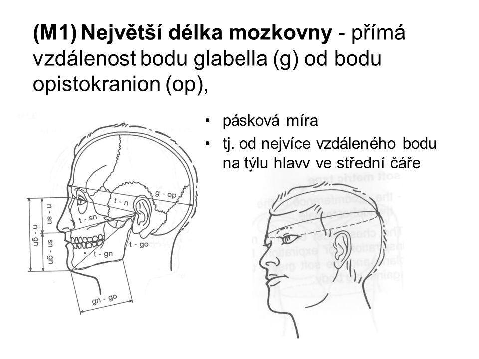 (M1)Největší délka mozkovny - přímá vzdálenost bodu glabella (g) od bodu opistokranion (op), pásková míra tj.