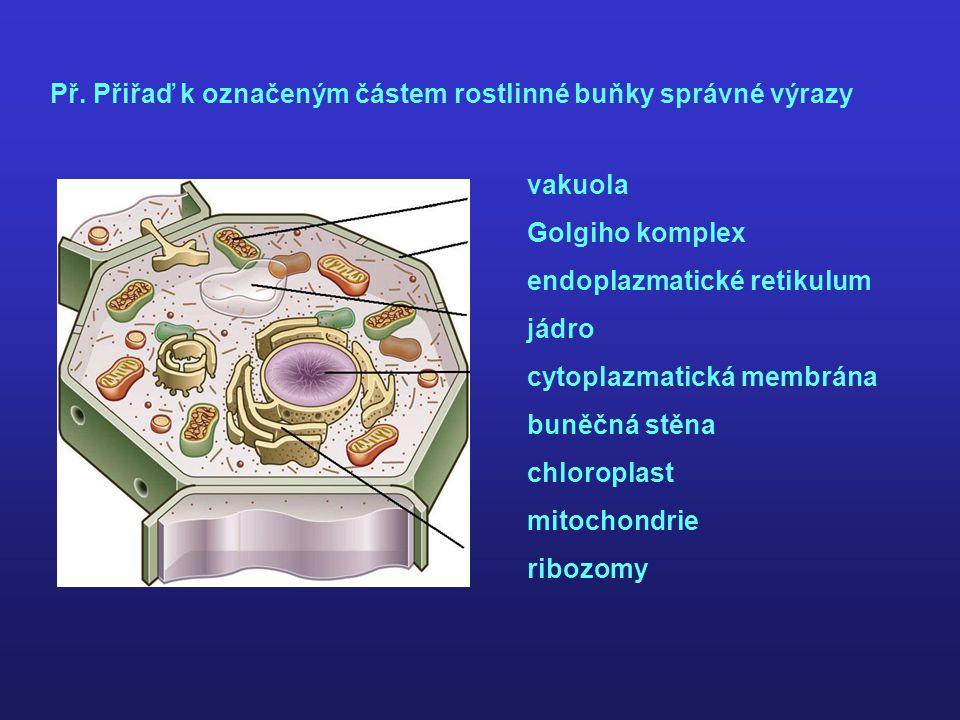 Př. Přiřaď k označeným částem rostlinné buňky správné výrazy vakuola Golgiho komplex endoplazmatické retikulum jádro cytoplazmatická membrána buněčná
