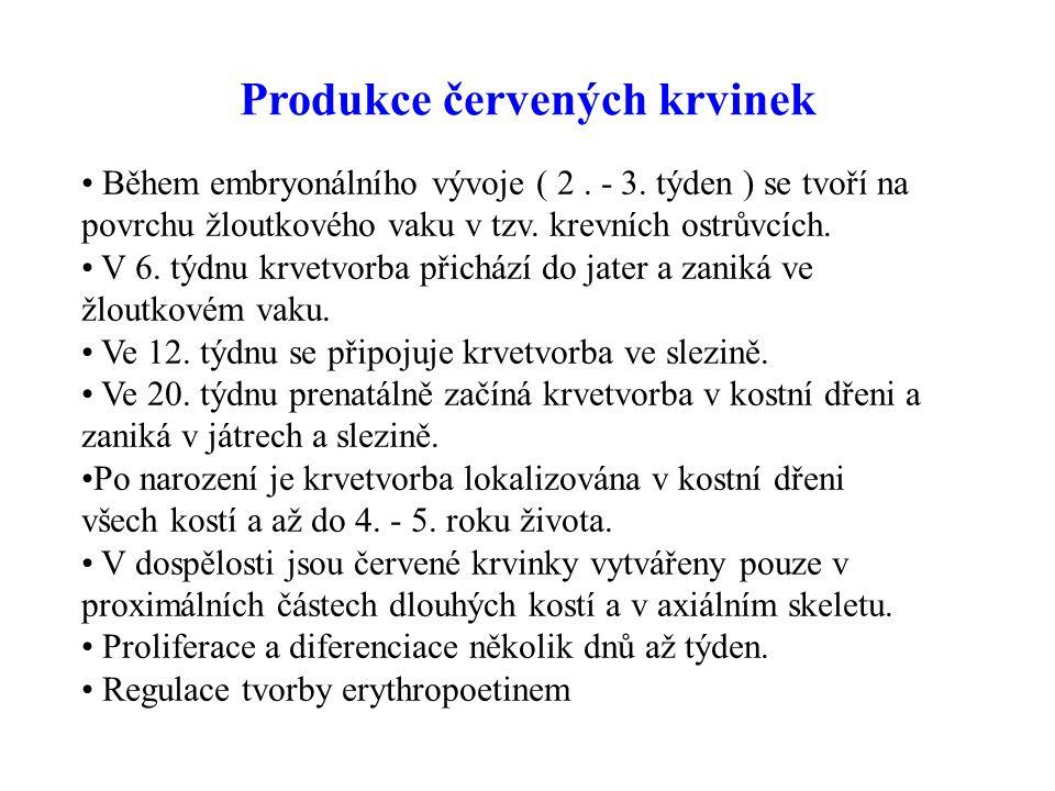 Produkce červených krvinek Během embryonálního vývoje ( 2.