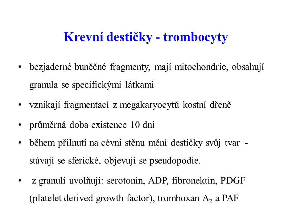 Krevní destičky - trombocyty bezjaderné buněčné fragmenty, mají mitochondrie, obsahují granula se specifickými látkami vznikají fragmentací z megakaryocytů kostní dřeně průměrná doba existence 10 dní během přilnutí na cévní stěnu mění destičky svůj tvar - stávají se sferické, objevují se pseudopodie.