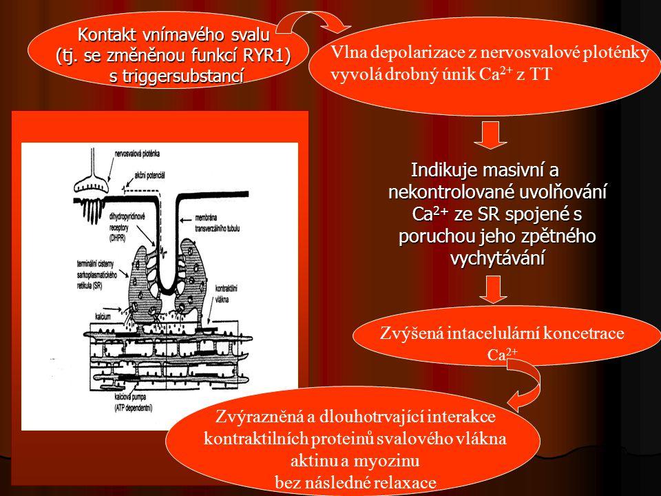 Nastává protahovaná svalová kontrakce Dramatický vzrůst aerobního, později anaerobního metabolismu extrémní nároky na kyslík nadprodukce CO 2 nadprodukce tepla zvýšená teplota svalu znamená nižší potřebu Ca 2+ pro reakci aktinu a myosinu toxická koncentrace Ca 2+ brzdí oxidativní fosforylaci v mitochondriích tzn.