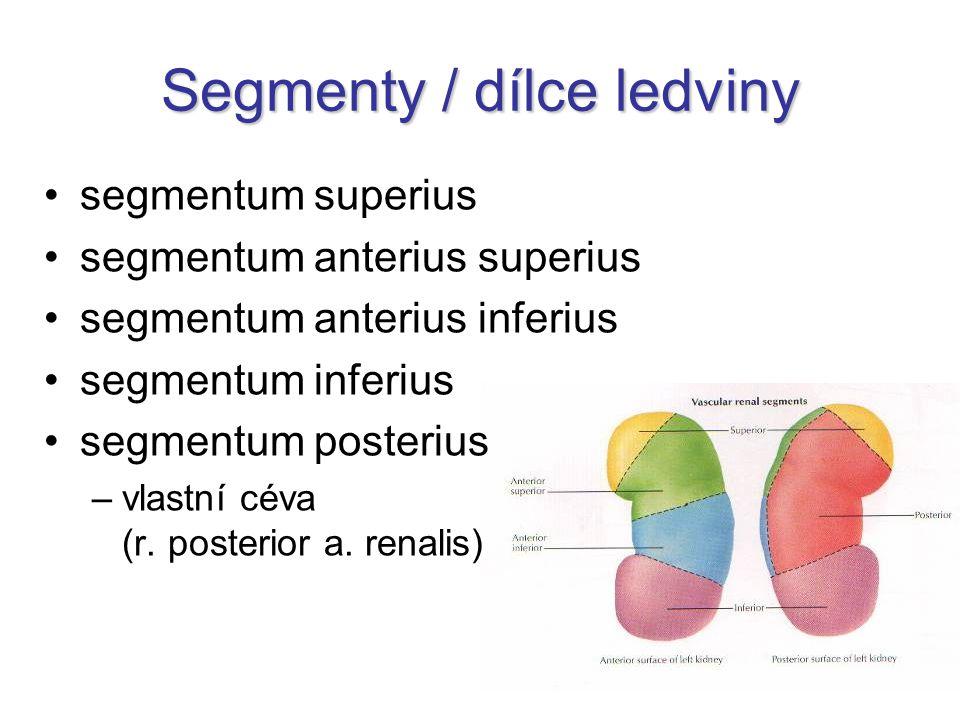 Segmenty / dílce ledviny segmentum superius segmentum anterius superius segmentum anterius inferius segmentum inferius segmentum posterius –vlastní cé