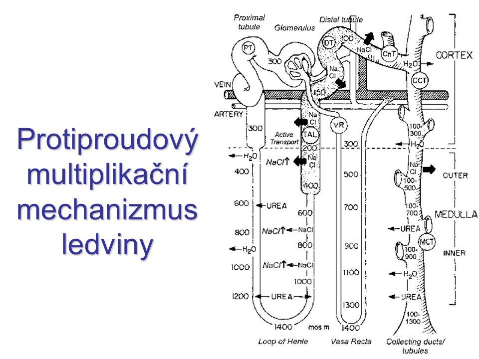 Protiproudový multiplikační mechanizmus ledviny