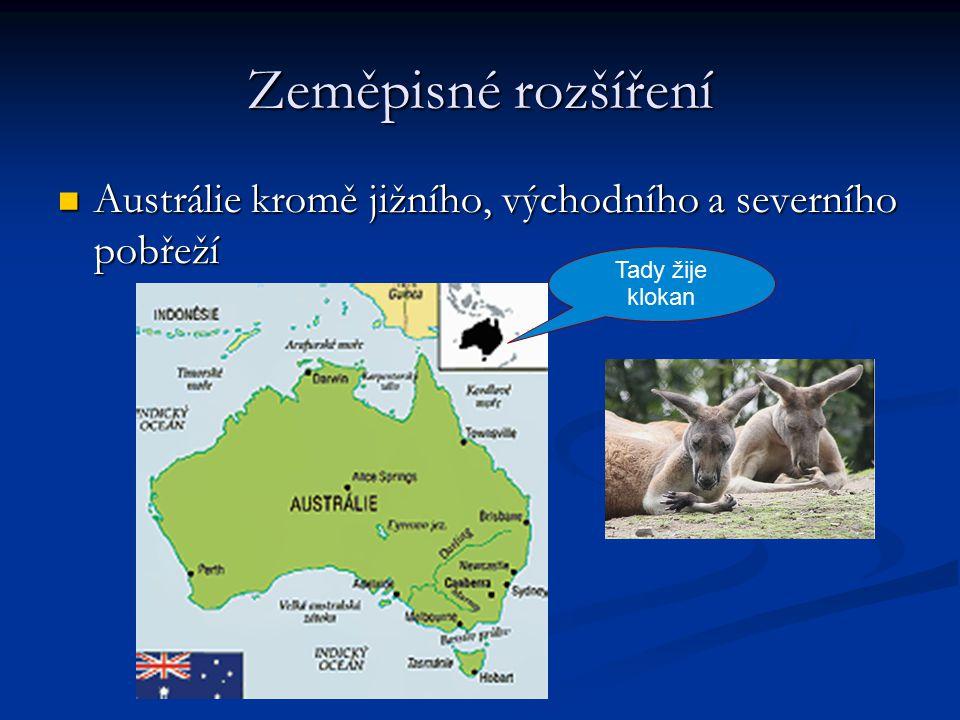 Zeměpisné rozšíření Austrálie kromě jižního, východního a severního pobřeží Austrálie kromě jižního, východního a severního pobřeží Tady žije klokan