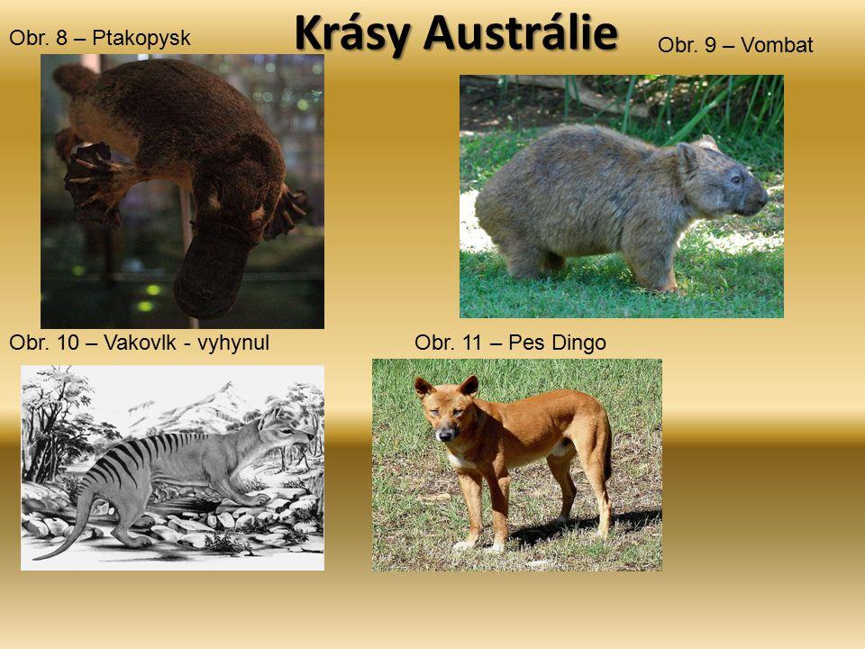 Krásy Austrálie Obr. 8 – Ptakopysk Obr. 9 – Vombat Obr. 10 – Vakovlk - vyhynulObr. 11 – Pes Dingo