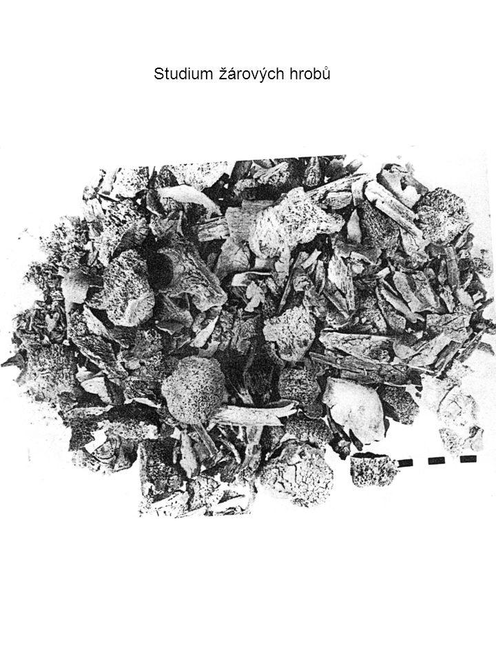 Studium žárových hrobů