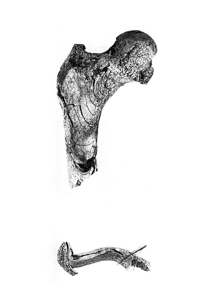 Rozdělením kostí na jednotlivé oddíly odhalíme též možnou příměs kostí z jiného jedince.