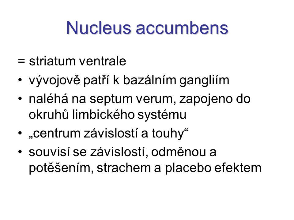 """Nucleus accumbens = striatum ventrale vývojově patří k bazálním gangliím naléhá na septum verum, zapojeno do okruhů limbického systému """"centrum závislostí a touhy souvisí se závislostí, odměnou a potěšením, strachem a placebo efektem"""
