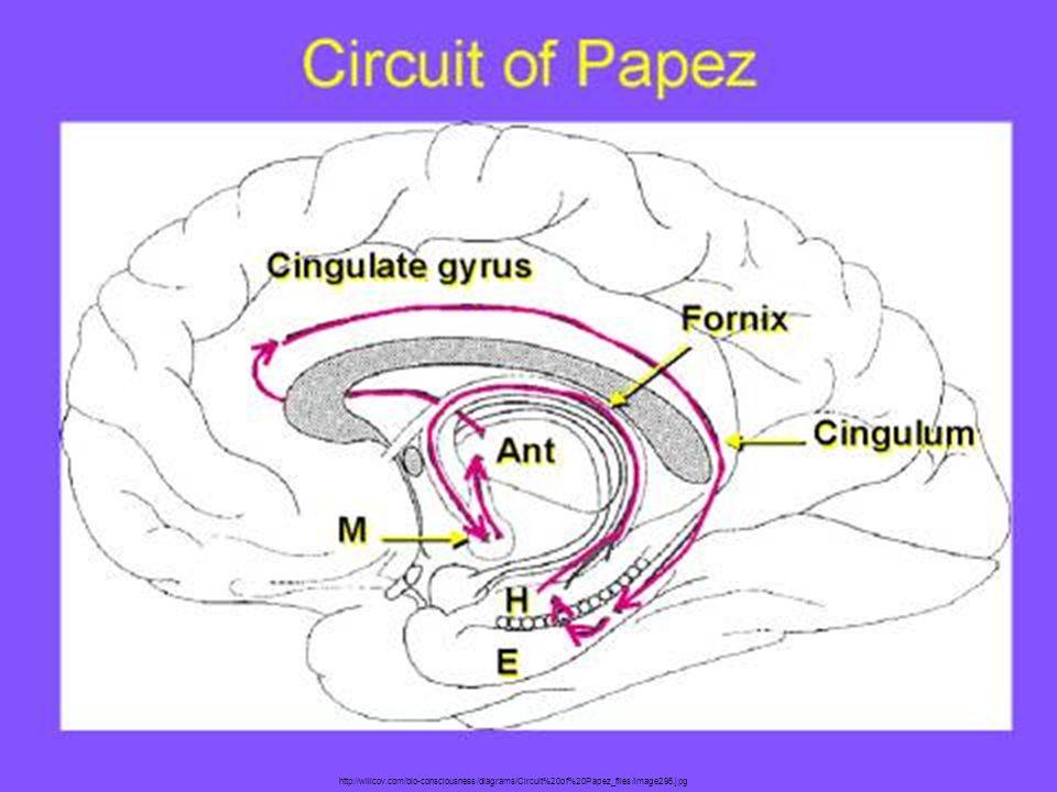 http://willcov.com/bio-consciousness/diagrams/Circuit%20of%20Papez_files/image295.jpg