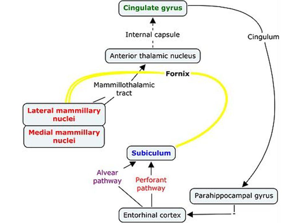 Andersenův okruh pikoška při milovníky neuroantomie Andersenův okruh pikoška při milovníky neuroantomie
