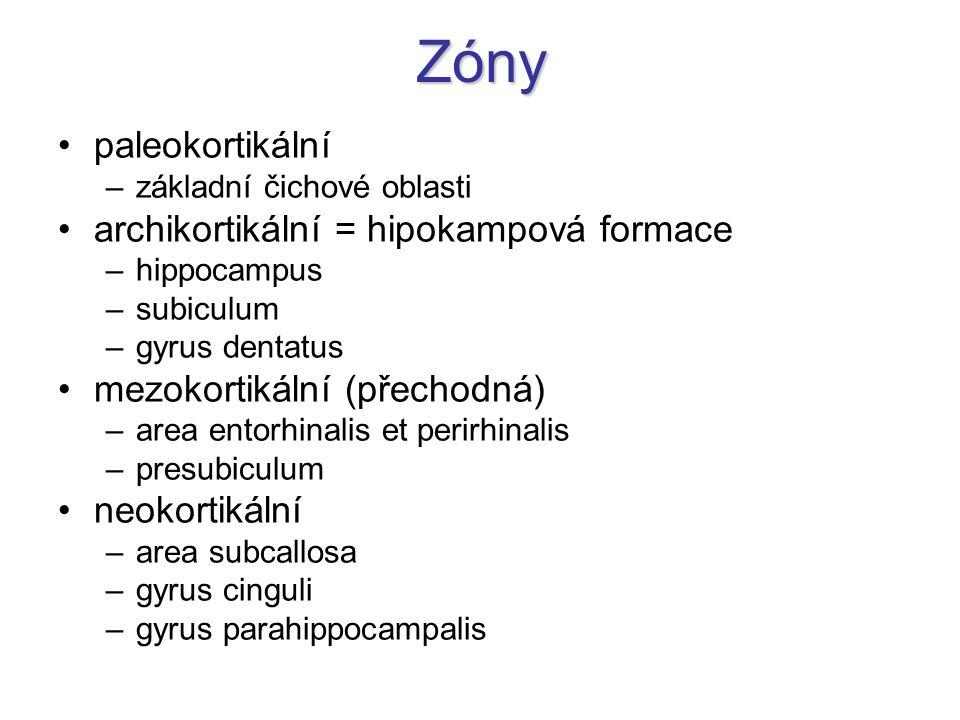Zóny paleokortikální –základní čichové oblasti archikortikální = hipokampová formace –hippocampus –subiculum –gyrus dentatus mezokortikální (přechodná) –area entorhinalis et perirhinalis –presubiculum neokortikální –area subcallosa –gyrus cinguli –gyrus parahippocampalis
