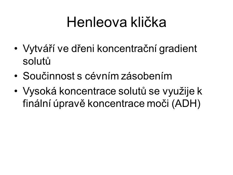 Henleova klička Vytváří ve dřeni koncentrační gradient solutů Součinnost s cévním zásobením Vysoká koncentrace solutů se využije k finální úpravě konc