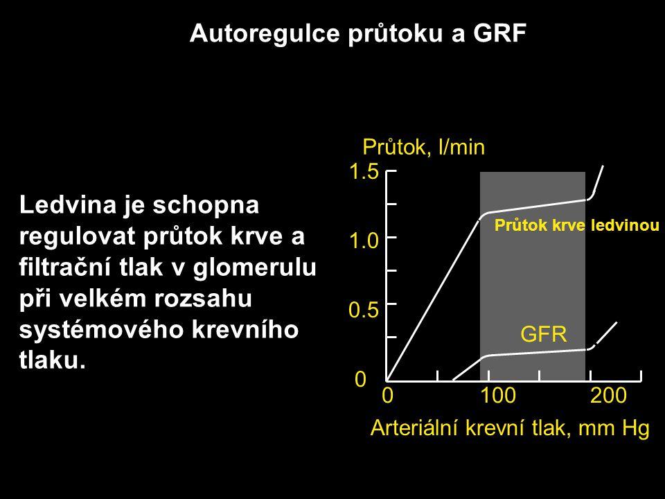 Autoregulce průtoku a GRF Průtok krve ledvinou GFR 0 100 200 Arteriální krevní tlak, mm Hg 1.5 1.0 0.5 0 Průtok, l/min Ledvina je schopna regulovat pr