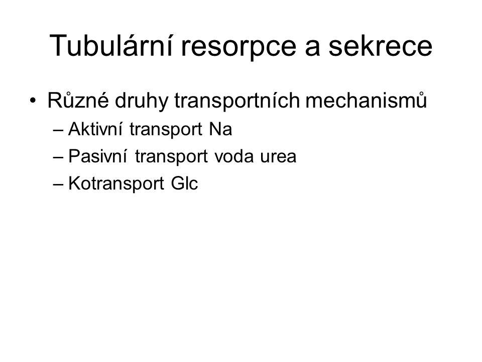 Tubulární resorpce a sekrece Různé druhy transportních mechanismů –Aktivní transport Na –Pasivní transport voda urea –Kotransport Glc