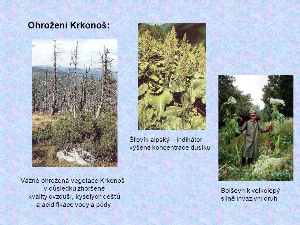 Ohrožení Krkonoš: Vážně ohrožená vegetace Krkonoš v důsledku zhoršené kvality ovzduší, kyselých dešťů a acidifikace vody a půdy Šťovík alpský – indiká