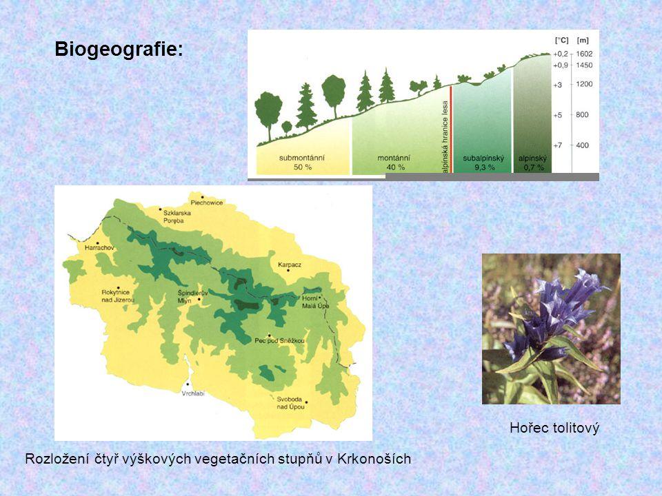 Biogeografie: Rozložení čtyř výškových vegetačních stupňů v Krkonoších Hořec tolitový