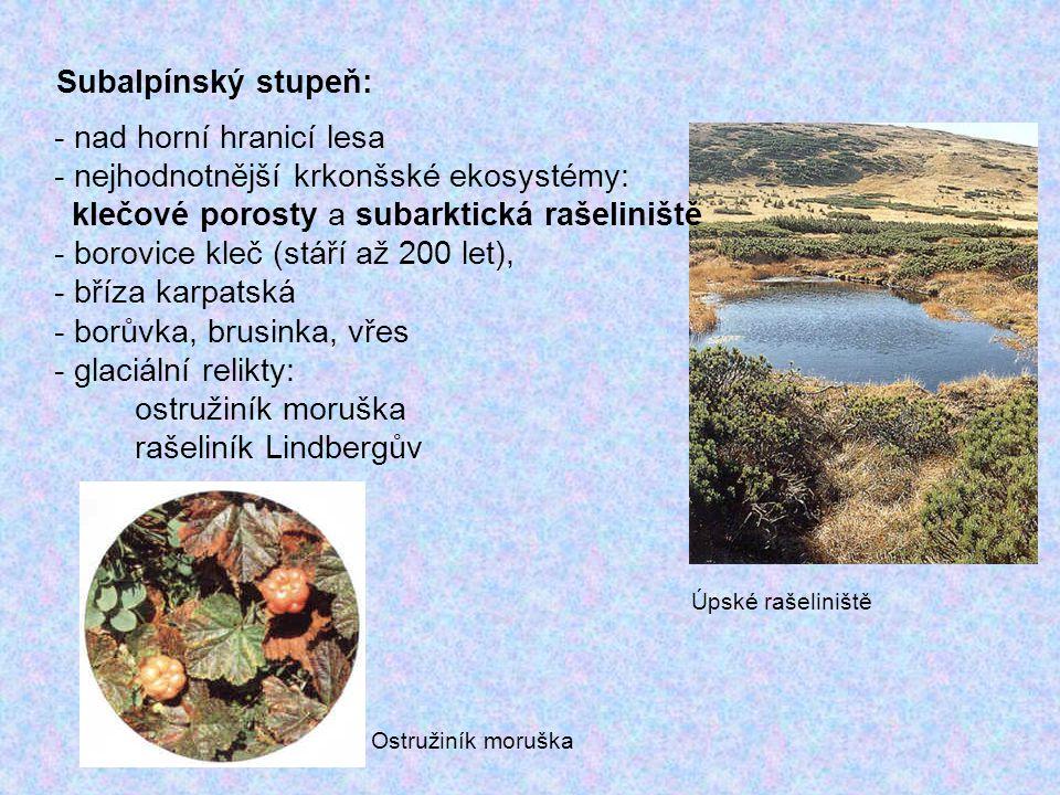 Alpínský stupeň: - pouze nejvyšší vrcholy Krkonoš (Sněžka, Luční hora) - velmi nepříznivé podmínky – mráz, vítr, sníh, led - pouze drobné keříčky borůvek, vlochyní, vřesu - trávy: sítina, kostřava - vzácný koniklec bílý - horské druhy jestřábníků (mnohé z nich endemitické) - vrba bylinná (minima inter omnes arbores – C.