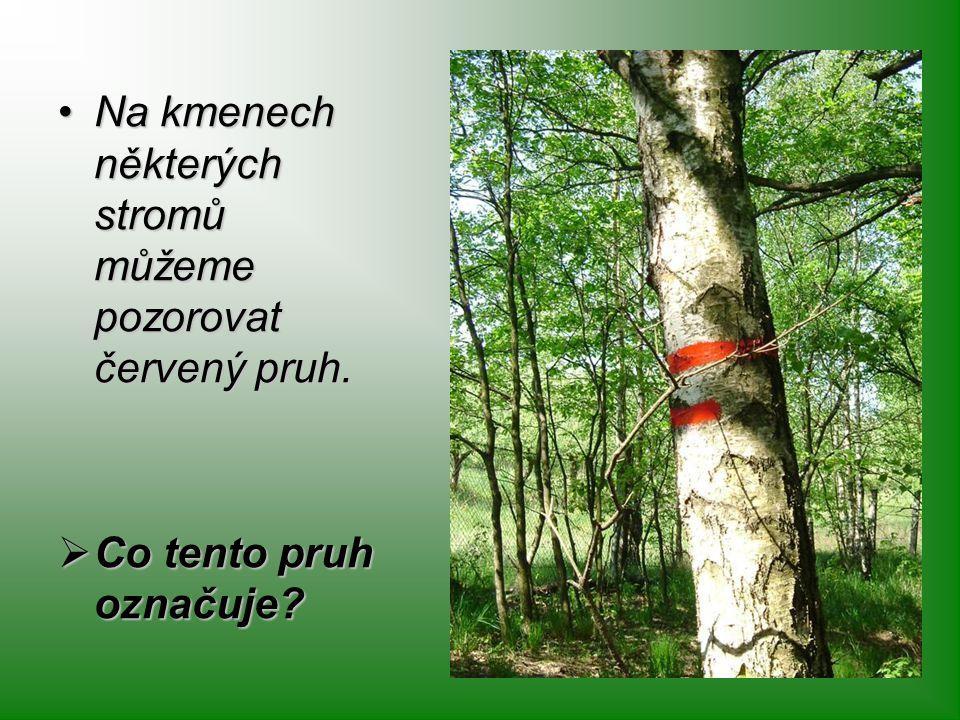 Na kmenech některých stromů můžeme pozorovat červený pruh.Na kmenech některých stromů můžeme pozorovat červený pruh.  Co tento pruh označuje?