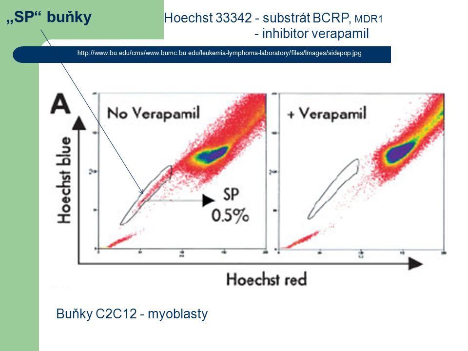 """SP"" buňky http://www.bu.edu/cms/www.bumc.bu.edu/leukemia-lymphoma-laboratory/files/Images/sidepop.jpg Hoechst 33342 - substrát BCRP, MDR1 - inhibitor"