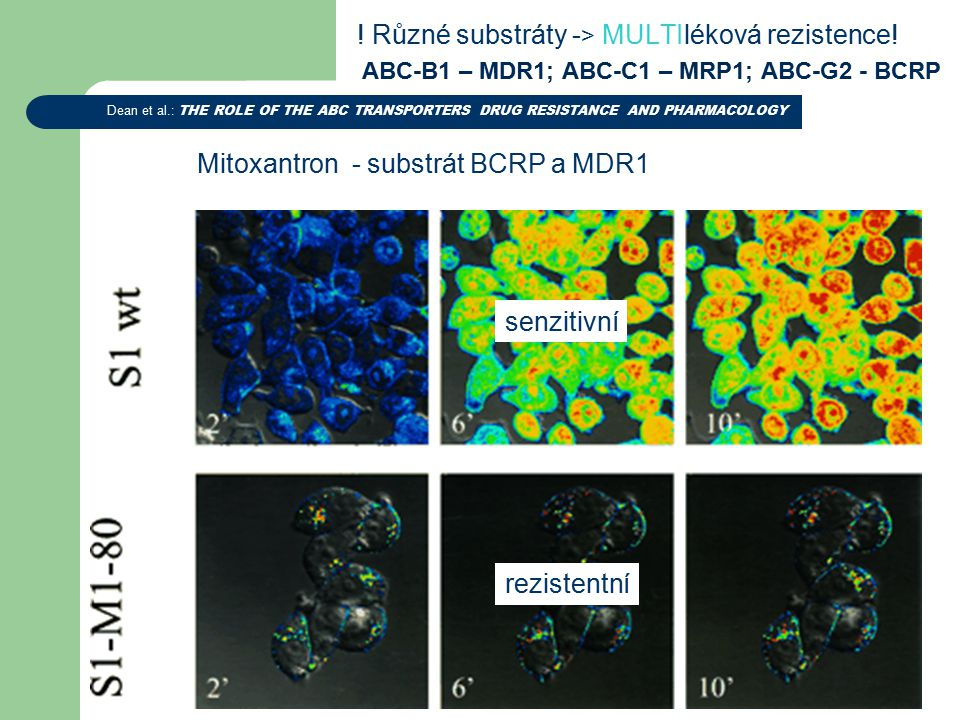 ! Různé substráty - > MULTIléková rezistence! ABC-B1 – MDR1; ABC-C1 – MRP1; ABC-G2 - BCRP Dean et al.: THE ROLE OF THE ABC TRANSPORTERS DRUG RESISTANC