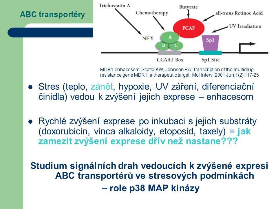 ABC transportéry Stres (teplo, zánět, hypoxie, UV záření, diferenciační činidla) vedou k zvýšení jejich exprese – enhacesom Rychlé zvýšení exprese po