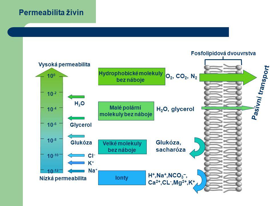 Permeabilita živin Hydrophobické molekuly bez náboje Malé polární molekuly bez náboje Velké molekuly bez náboje Ionty O 2, CO 2, N 2 H 2 O, glycerol Glukóza, sacharóza H +,Na +,NCO 3 –, Ca 2+,CL -,Mg 2+,K + Fosfolipidová dvouvrstva Nízká permeabilita Vysoká permeabilita 10 0 10 -2 10 -4 10 -6 10 -8 10 -10 10 -12 H2OH2O Glycerol Glukóza Cl – K+K+ Na + Pasivní transport