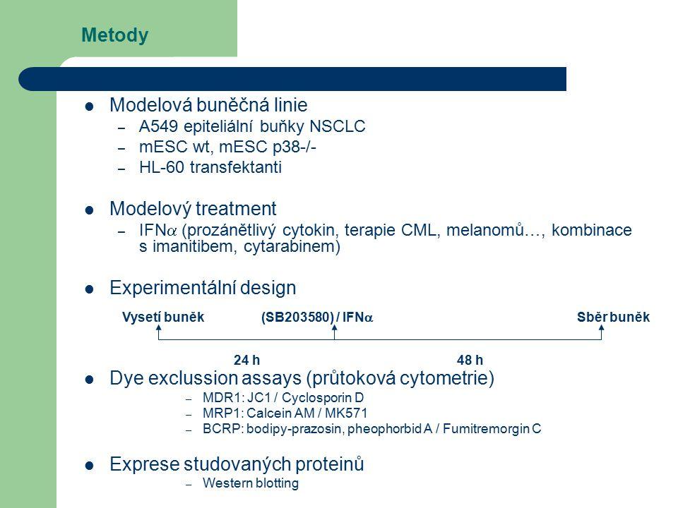 Metody Modelová buněčná linie – A549 epiteliální buňky NSCLC – mESC wt, mESC p38-/- – HL-60 transfektanti Modelový treatment – IFN  (prozánětlivý cytokin, terapie CML, melanomů…, kombinace s imanitibem, cytarabinem) Experimentální design Dye exclussion assays (průtoková cytometrie) – MDR1: JC1 / Cyclosporin D – MRP1: Calcein AM / MK571 – BCRP: bodipy-prazosin, pheophorbid A / Fumitremorgin C Exprese studovaných proteinů – Western blotting Vysetí buněk (SB203580) / IFN  Sběr buněk 24 h 48 h