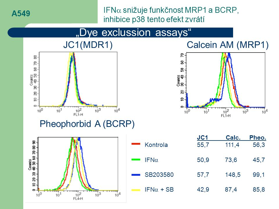 "A549 ""Dye exclussion assays"" JC1(MDR1) Calcein AM (MRP1) Pheophorbid A (BCRP) JC1 Calc. Pheo. Kontrola55,7111,456,3 IFN  50,973,645,7 SB20358057,7148"