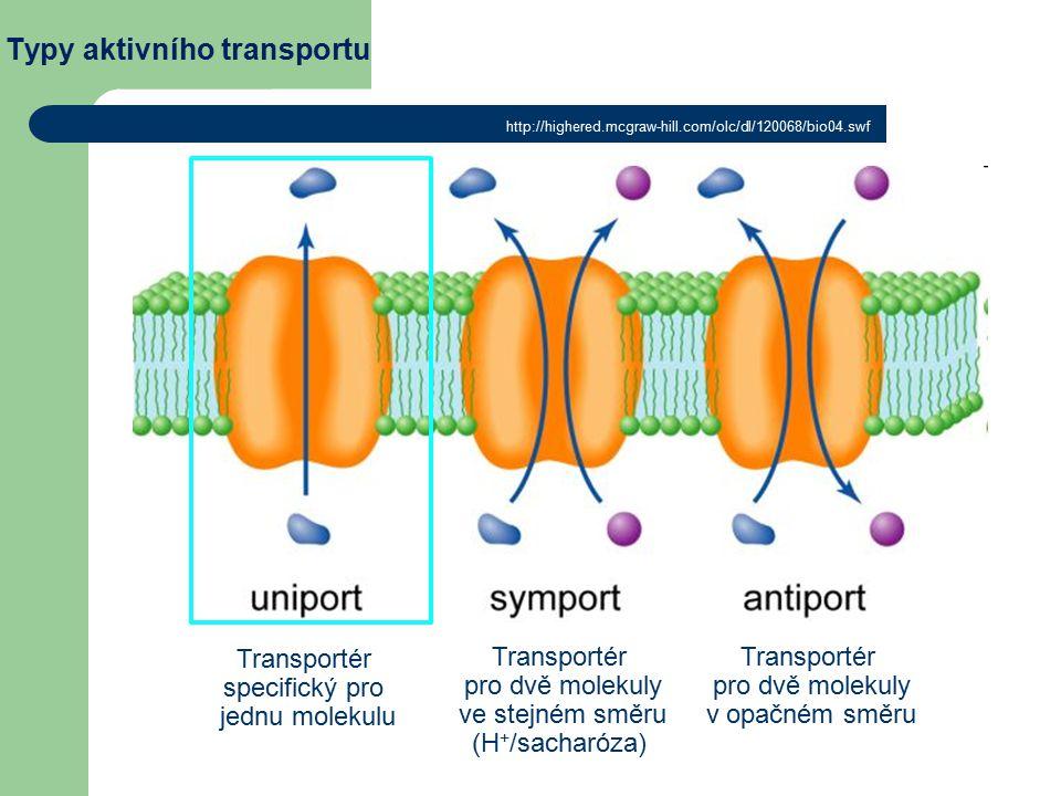 Typy aktivního transportu Transportér specifický pro jednu molekulu Transportér pro dvě molekuly ve stejném směru (H + /sacharóza) Transportér pro dvě molekuly v opačném směru http://highered.mcgraw-hill.com/olc/dl/120068/bio04.swf