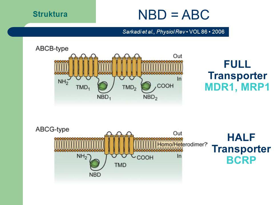 Struktura Sarkadi et al., Physiol Rev VOL 86 2006 FULL Transporter MDR1, MRP1 HALF Transporter BCRP NBD = ABC