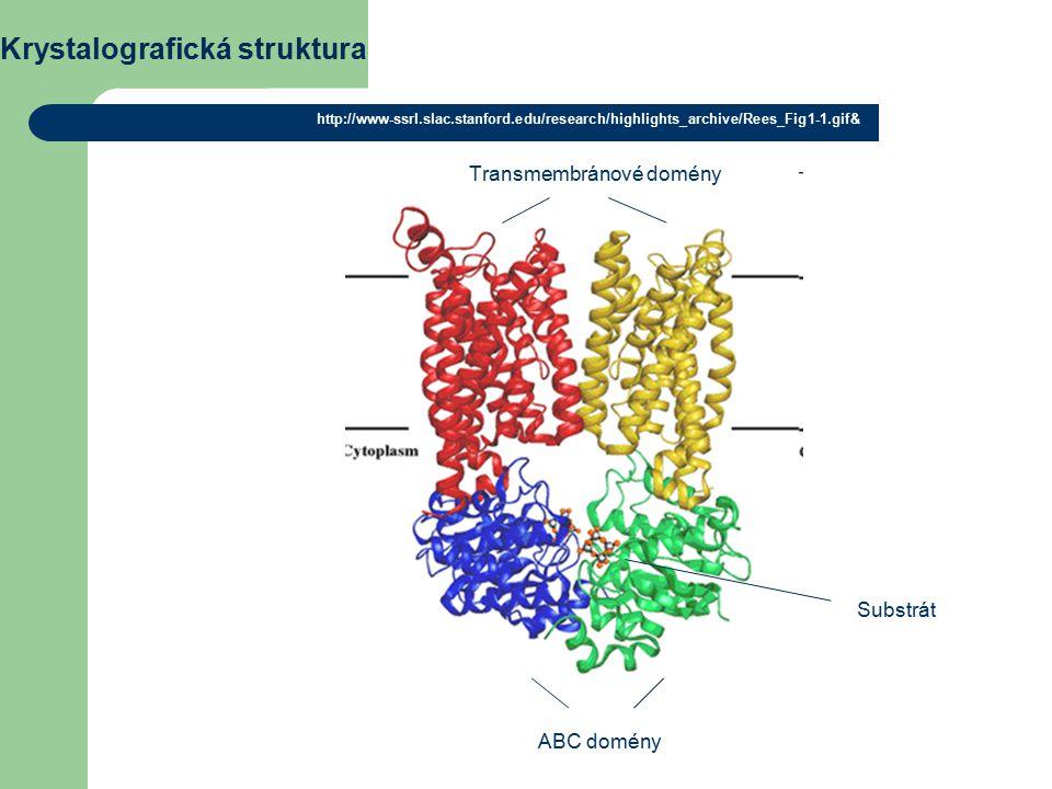 Krystalografická struktura http://www-ssrl.slac.stanford.edu/research/highlights_archive/Rees_Fig1-1.gif& ABC domény Substrát Transmembránové domény