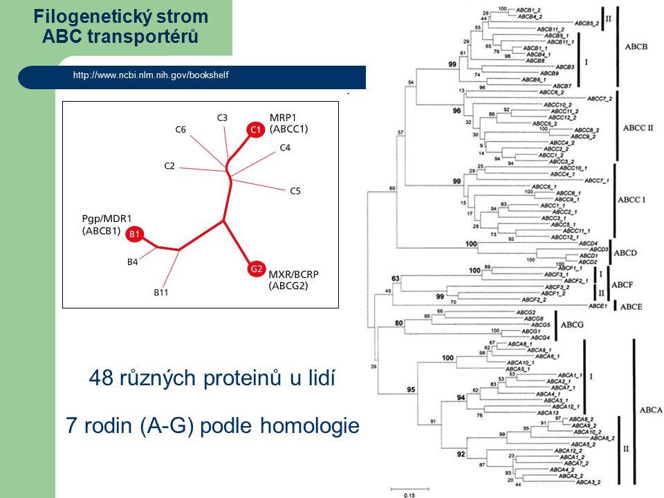 Filogenetický strom ABC transportérů http://www.ncbi.nlm.nih.gov/bookshelf 48 různých proteinů u lidí 7 rodin (A-G) podle homologie