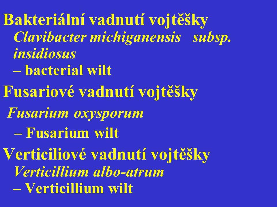 Bakteriální vadnutí vojtěšky Clavibacter michiganensis subsp. insidiosus – bacterial wilt Fusariové vadnutí vojtěšky Fusarium oxysporum – Fusarium wil