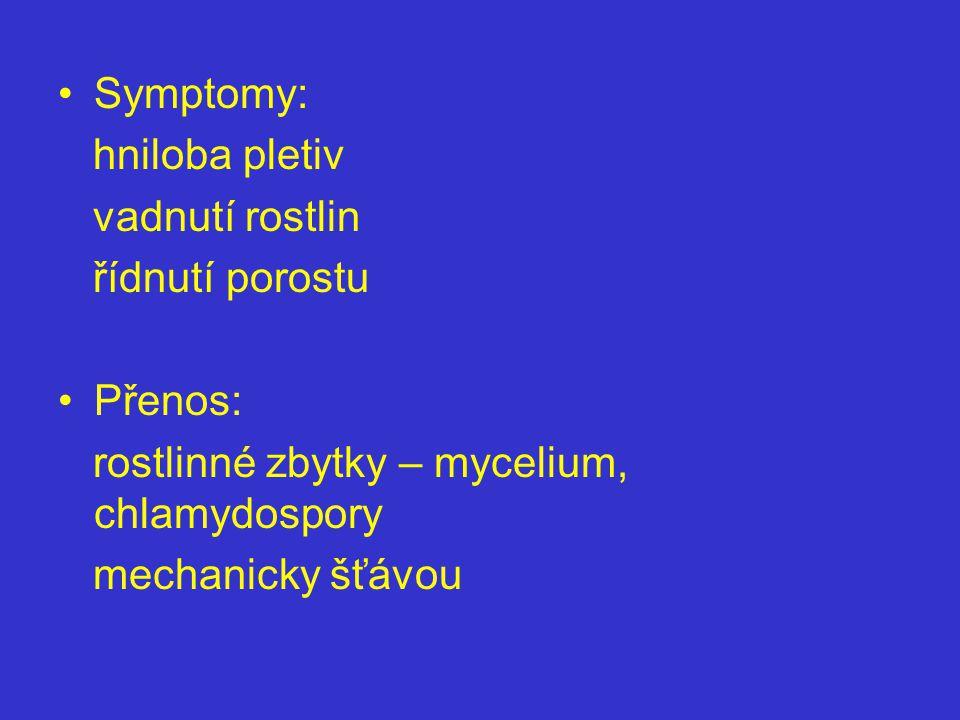 Symptomy: hniloba pletiv vadnutí rostlin řídnutí porostu Přenos: rostlinné zbytky – mycelium, chlamydospory mechanicky šťávou