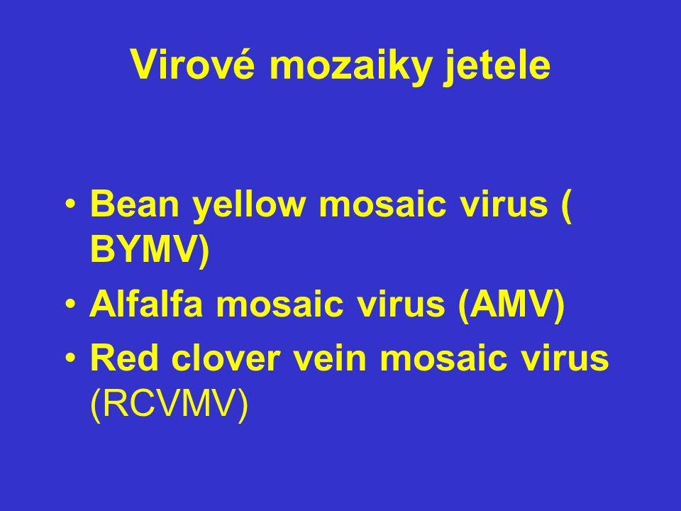 Virové mozaiky jetele Bean yellow mosaic virus ( BYMV) Alfalfa mosaic virus (AMV) Red clover vein mosaic virus (RCVMV)