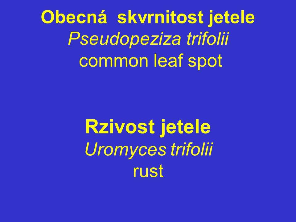 Obecná skvrnitost jetele Pseudopeziza trifolii common leaf spot Rzivost jetele Uromyces trifolii rust