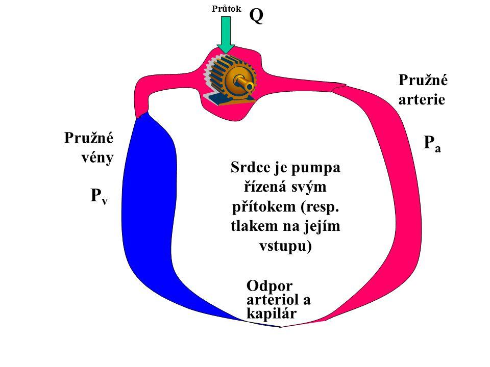 Srdce je pumpa řízená svým přítokem (resp. tlakem na jejím vstupu) Průtok Odpor arteriol a kapilár Pružné arterie Pružné vény PvPv PaPa Q