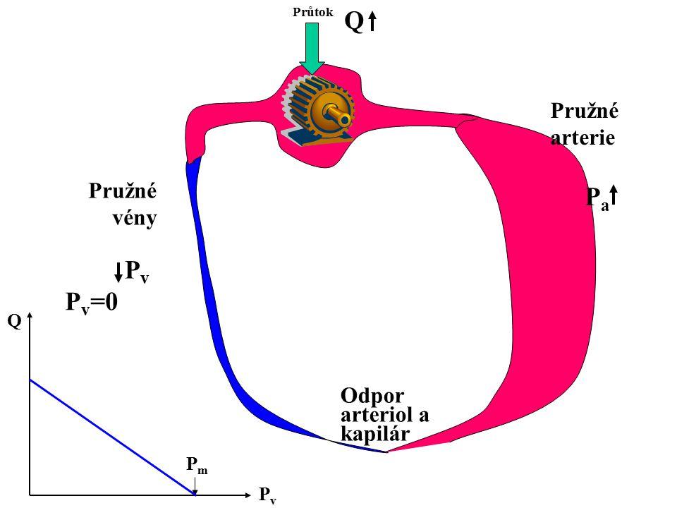 Průtok Odpor arteriol a kapilár Pružné arterie Pružné vény PvPv PaPa PvPv Q PmPm Q P v =0
