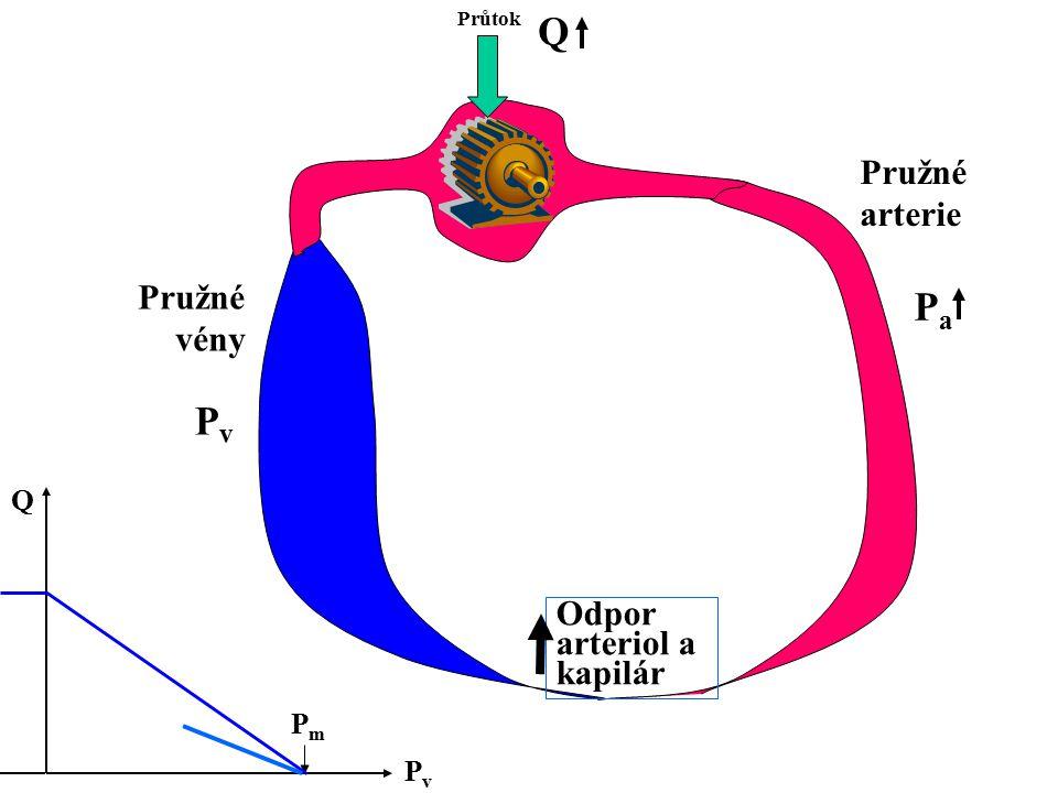 Průtok Odpor arteriol a kapilár Pružné arterie Pružné vény PvPv PaPa Q PvPv Q PmPm