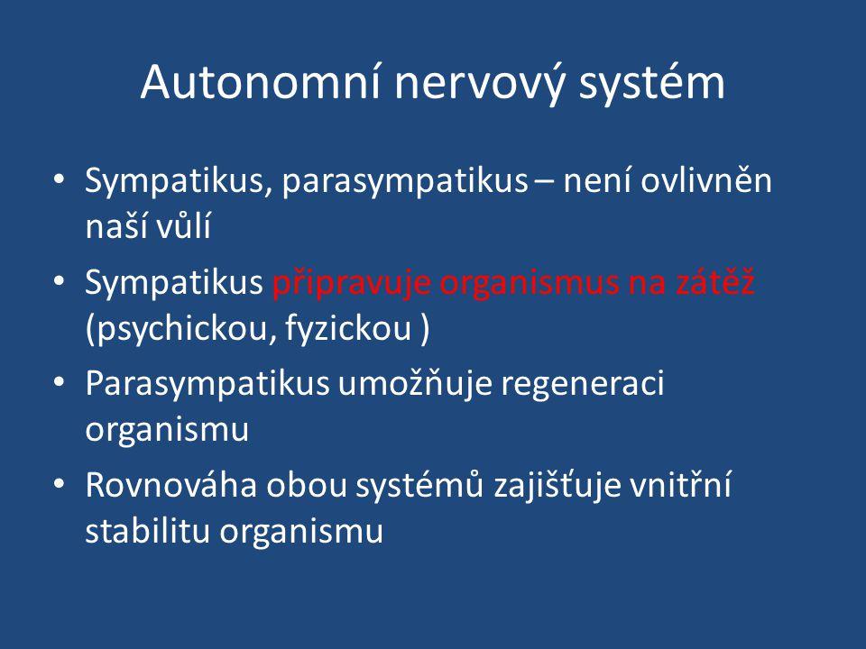 Autonomní nervový systém Sympatikus, parasympatikus – není ovlivněn naší vůlí Sympatikus připravuje organismus na zátěž (psychickou, fyzickou ) Parasympatikus umožňuje regeneraci organismu Rovnováha obou systémů zajišťuje vnitřní stabilitu organismu