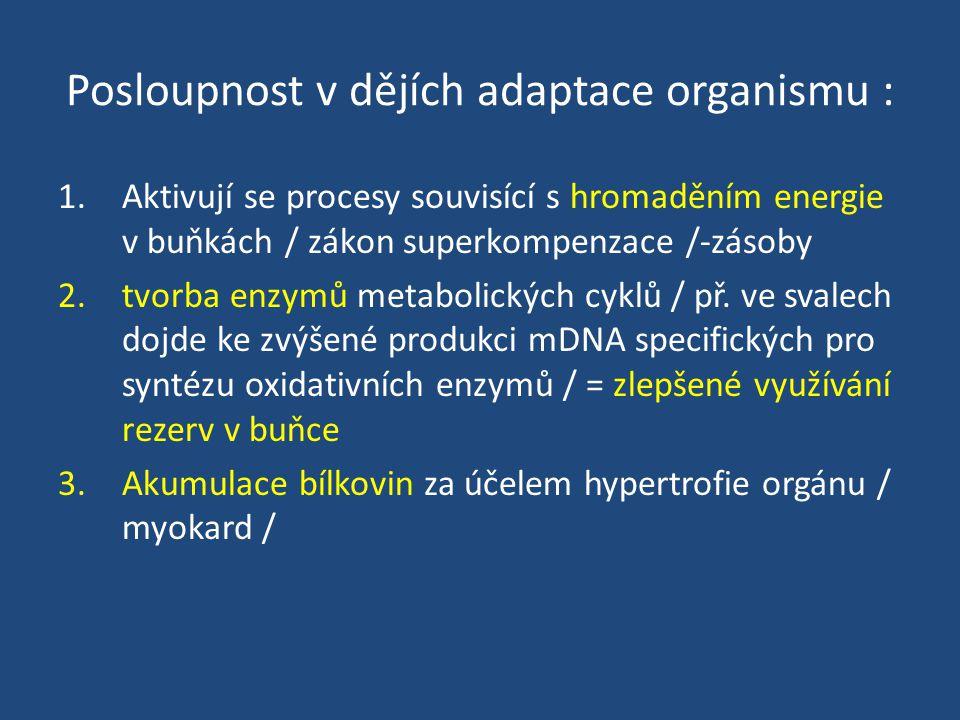 Posloupnost v dějích adaptace organismu : 1.Aktivují se procesy souvisící s hromaděním energie v buňkách / zákon superkompenzace /-zásoby 2.tvorba enzymů metabolických cyklů / př.