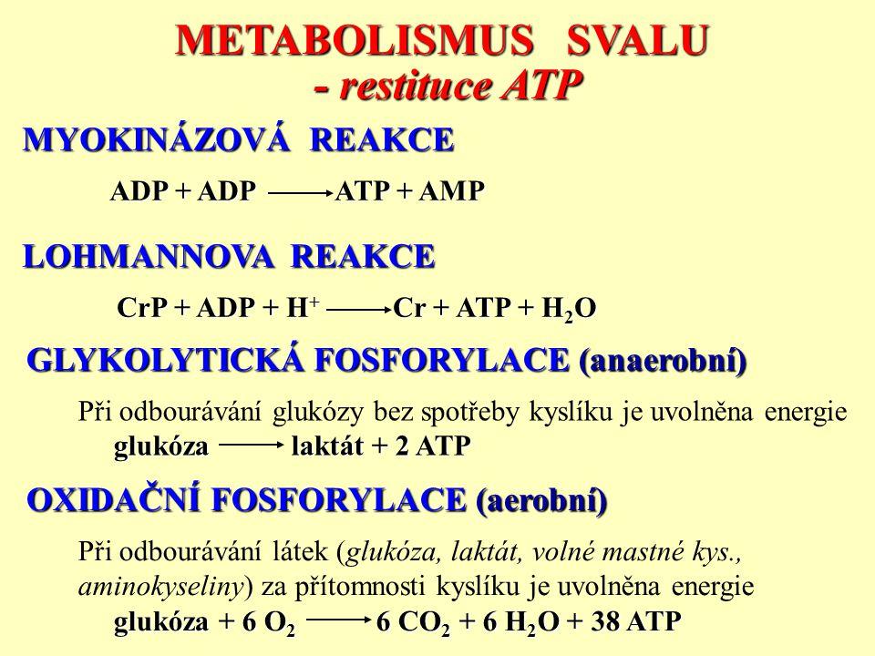 GLYKOLYTICKÁ FOSFORYLACE (anaerobní) Při odbourávání glukózy bez spotřeby kyslíku je uvolněna energie glukóza laktát + 2 ATP OXIDAČNÍ FOSFORYLACE (aer