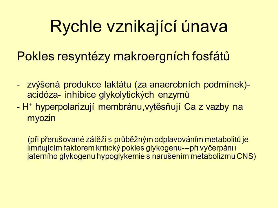 Rychle vznikající únava Pokles resyntézy makroergních fosfátů -zvýšená produkce laktátu (za anaerobních podmínek)- acidóza- inhibice glykolytických en