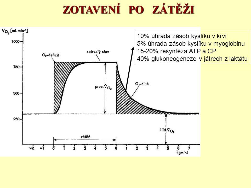 ZOTAVENÍ PO ZÁTĚŽI 10% úhrada zásob kyslíku v krvi 5% úhrada zásob kyslíku v myoglobinu 15-20% resyntéza ATP a CP 40% glukoneogeneze v játrech z laktá