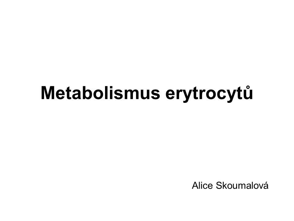 Metabolismus erytrocytů Alice Skoumalová
